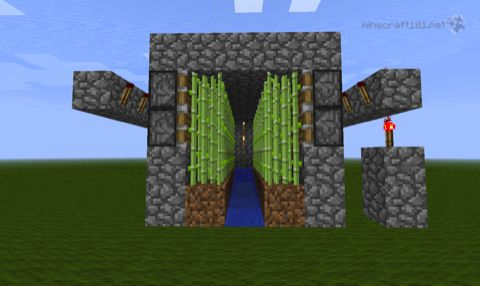 finished sugar cane farm